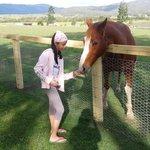 pretty farm horse