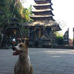Pura Goa Lawah and a Bali dog...always a dog in Bali events.