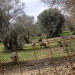 η φάρμα μας/ our farm