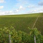 Domaine de l'Erable Vins de Chablis