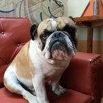 Хостельный пес Гугл :)