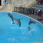 Spectacle avec les dauphins au Théâtre de Poséidon