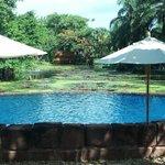 The Serene & Beautiful Lotus Pond Pool