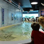 Reef Stingray Exhibit