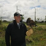 Tom- Harris Hawk