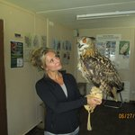 Robin- owl experience