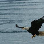 Amazing Eagles
