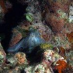 Octopus on the night dive at Davis Ledge