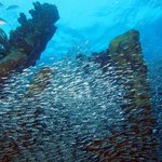 Wreck of the Benwood