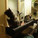 ナディアホテル猫部屋(物置?)