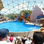 Show do leão marinho