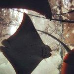 ¡Visita el acuario si viajas a Mazatlán con niños!