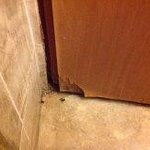 Bathroom door warped and damaged