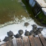 the turtles you can feed