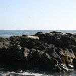Sea Lions in natural habitat
