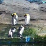 I pinguini dello zoo