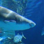 Aquário dos tubarões