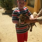 Holding a baby tiger on the safari