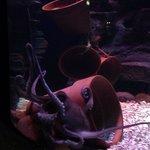 Octopus display