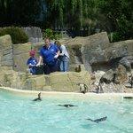Feeding Penguins