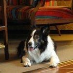 Hotelhund