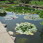 Two beautiful lily ponds