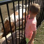 Patting the farm animals