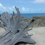 "Driftwood at Snorkel Park. Noticed someone else put up a picture & said it was ""Coral"". Incorrec"