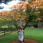 The farm nature, Flamboyan trees