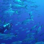Deep Water Dive