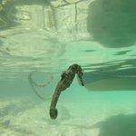 Sea horse between dives