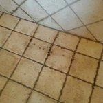 Un acercamiento al estado higiénico de la ducha