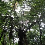 A beautiful tree in the rainforest