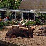 Прямо рядом со входом в зоопарк