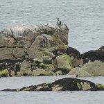 Seals basking