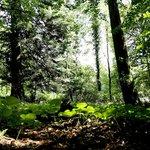 Woods on Inish Rath