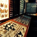 amazing private collection of butterflies