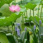 Green Lake flowers