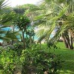 Giardino del Park Hotel Terme Mediterraneo