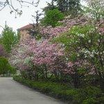 in primavera