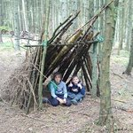 Building dens in the forest
