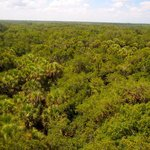 Forest as far as your eye can see from the top of the 74 foot tower.