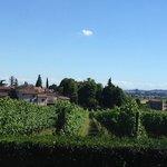 neighbourhood vineyards