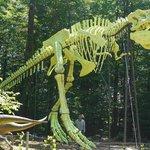 A világ legnagyobb T Rex csontváz modellje