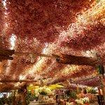 flower market - soffitto di fiori secchi