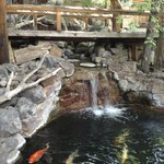 Koi pond and waterfall