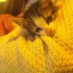 Beautiful kitten Jonathan!