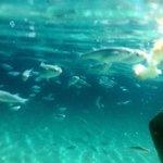 Snorkelling at koukanaries, the fish love bread!!!!!