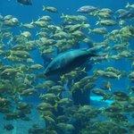 Peixes e mais peixes
