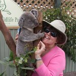 Barb getting a pat from the koala.